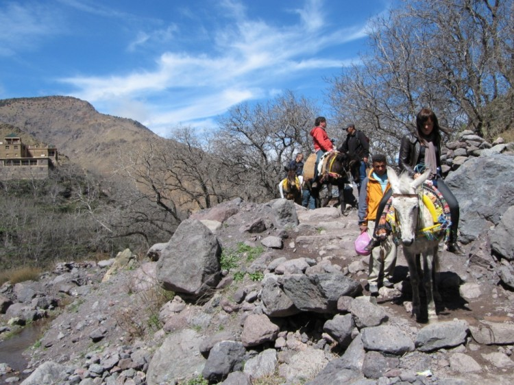 Day trip to berber village with Mule trek from Marrakech